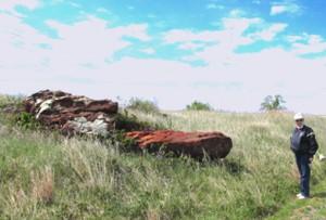janlongredrock1