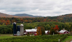 Boyden Winery Farm, Cambridge