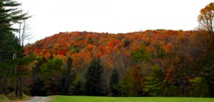 Autum trees of Vermont hillside