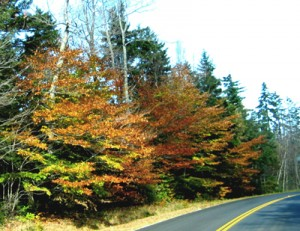Fall tree colors on New Market road