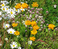 Wildflowers in the RV Park