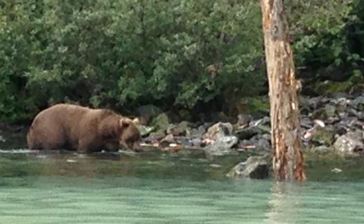 28 brown bear on lake Deb