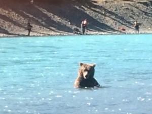 Russian River Brown Bear