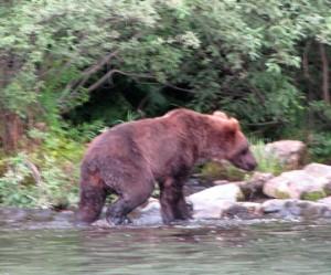 T Cinamin bear