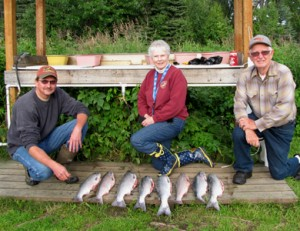 Our Silver Salmon catdh