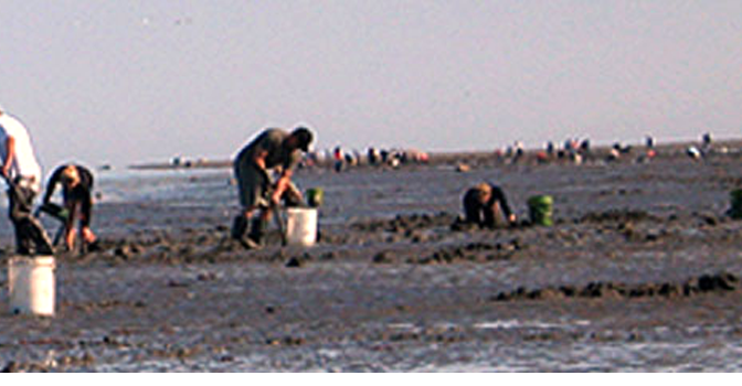 Clamming Tides