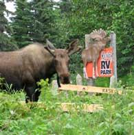 Spike the Moose RV Park mascot