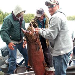 landing 40 lb. King Salmon